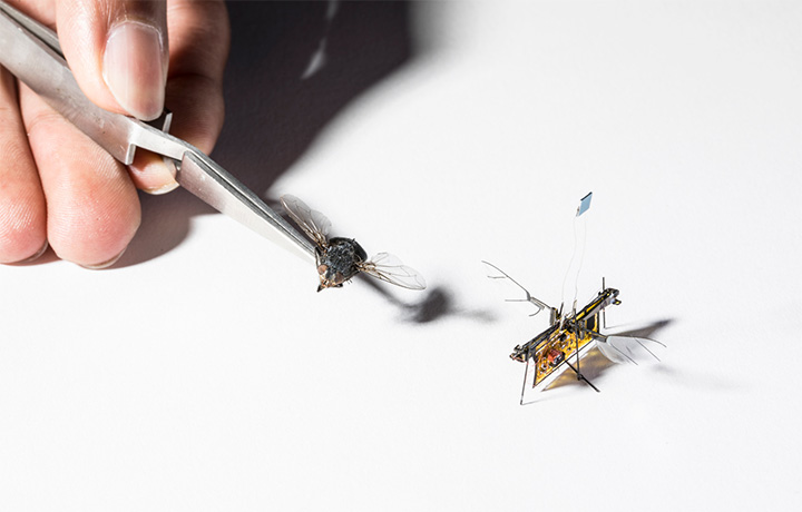 RoboFly and a real fly